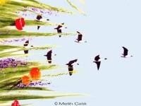 melih-calik_illusionsmalerei_30045