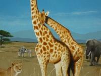 melih-calik_wandbild_safari_31007