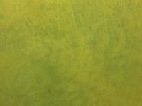 surfacedesign-wandgestaltung-001-11012-stucco-aureum